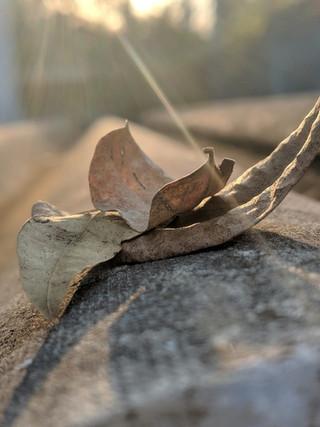 Folha seca - Xioami Mia1 - Dual Camera.j