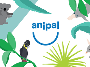 Meet Clancy and the AniPal Crew