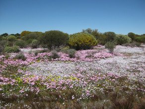 Supporting the Yarra Yarra Biodiversity Corridor