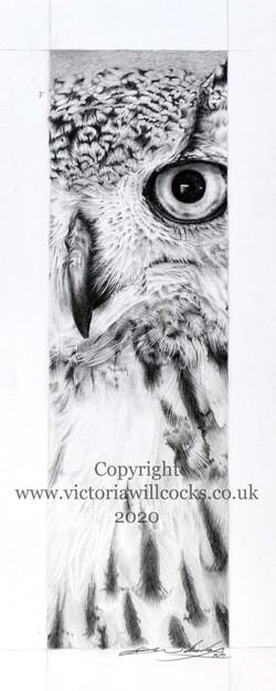 Owl Thin Victoria Willcocks