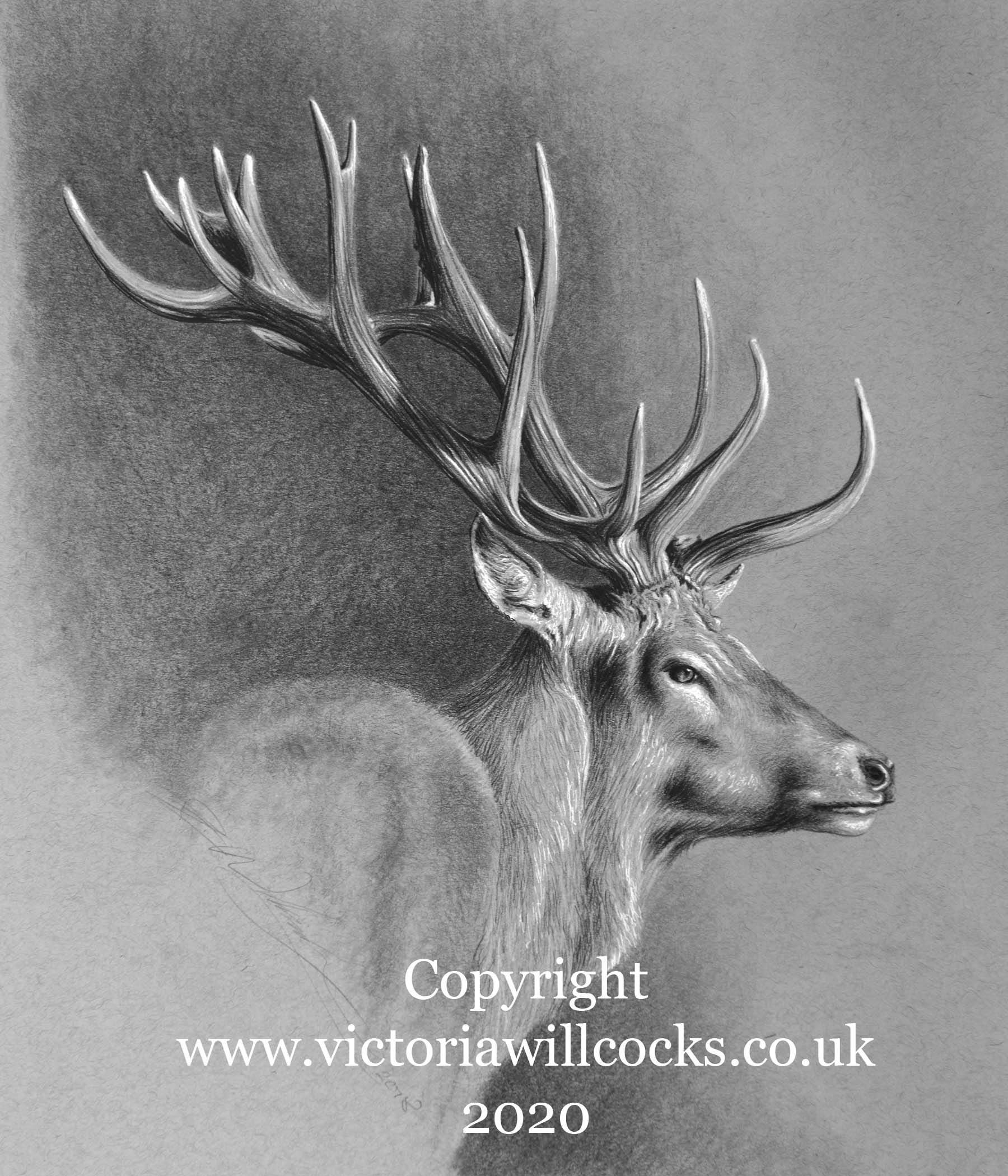 Reg Stag ii Victoria Willcocks