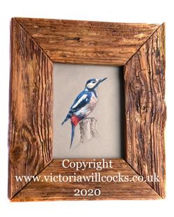 Spotted Woodpecker Victoria Willcocks