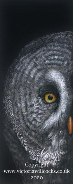 Grey Owl Victoria Willcocks