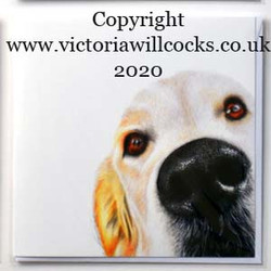 Digby Golden Retriever Cards Victoria WI