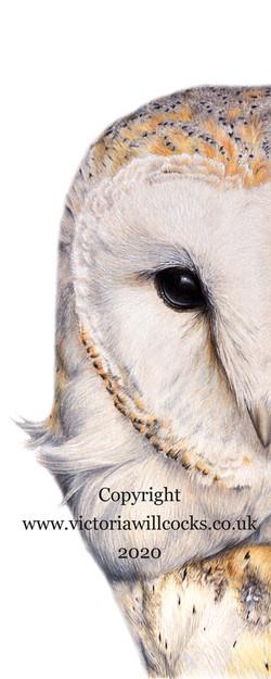 Barn Owl Half Victoria Willcocks