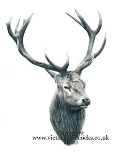 stag iii Victoria Willcocks