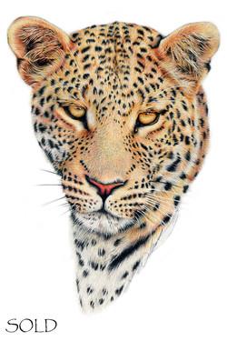 Leopard s