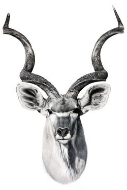 kudu a