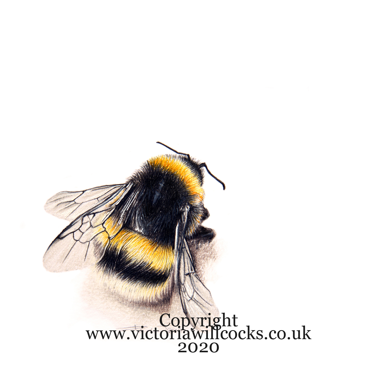 Bumble bee Victoria Willcocks
