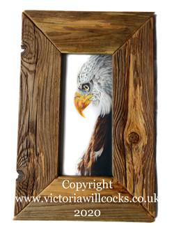 Amarican Eagle Victoria Willcocks