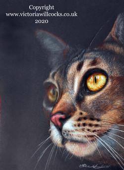 Bengal Cat ii Victoria Willcocks
