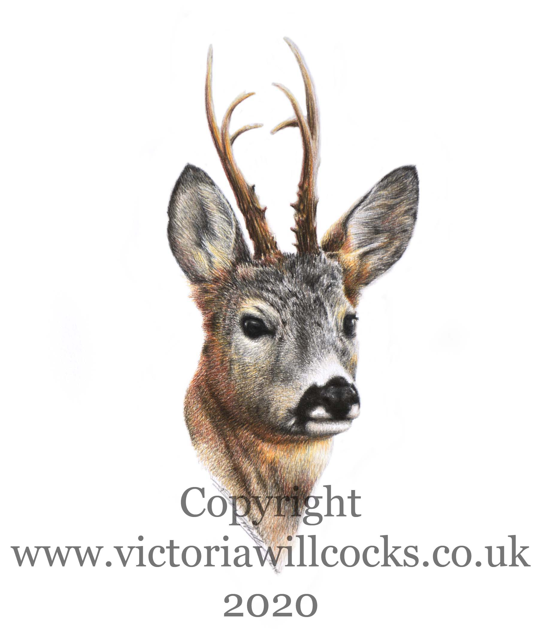 Roe Buck iii Victoria Willcocks