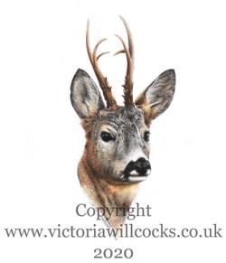 Roe Buck iii Victoria Willcocks