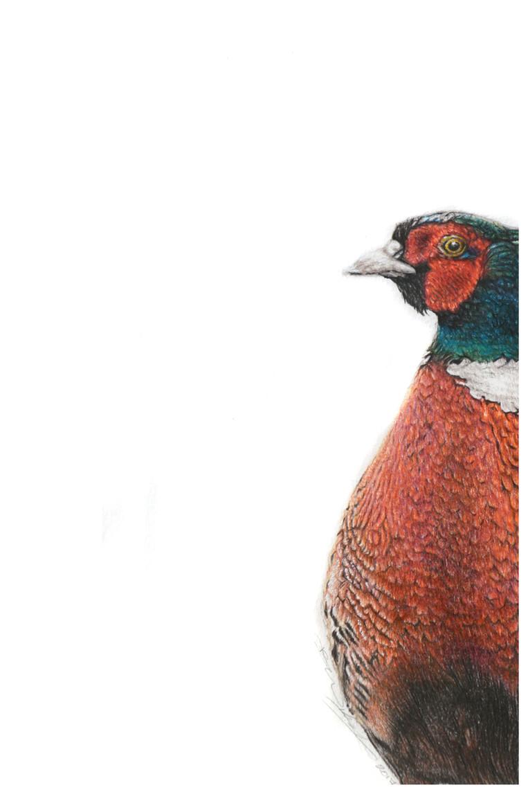 Pheasant a.jpg