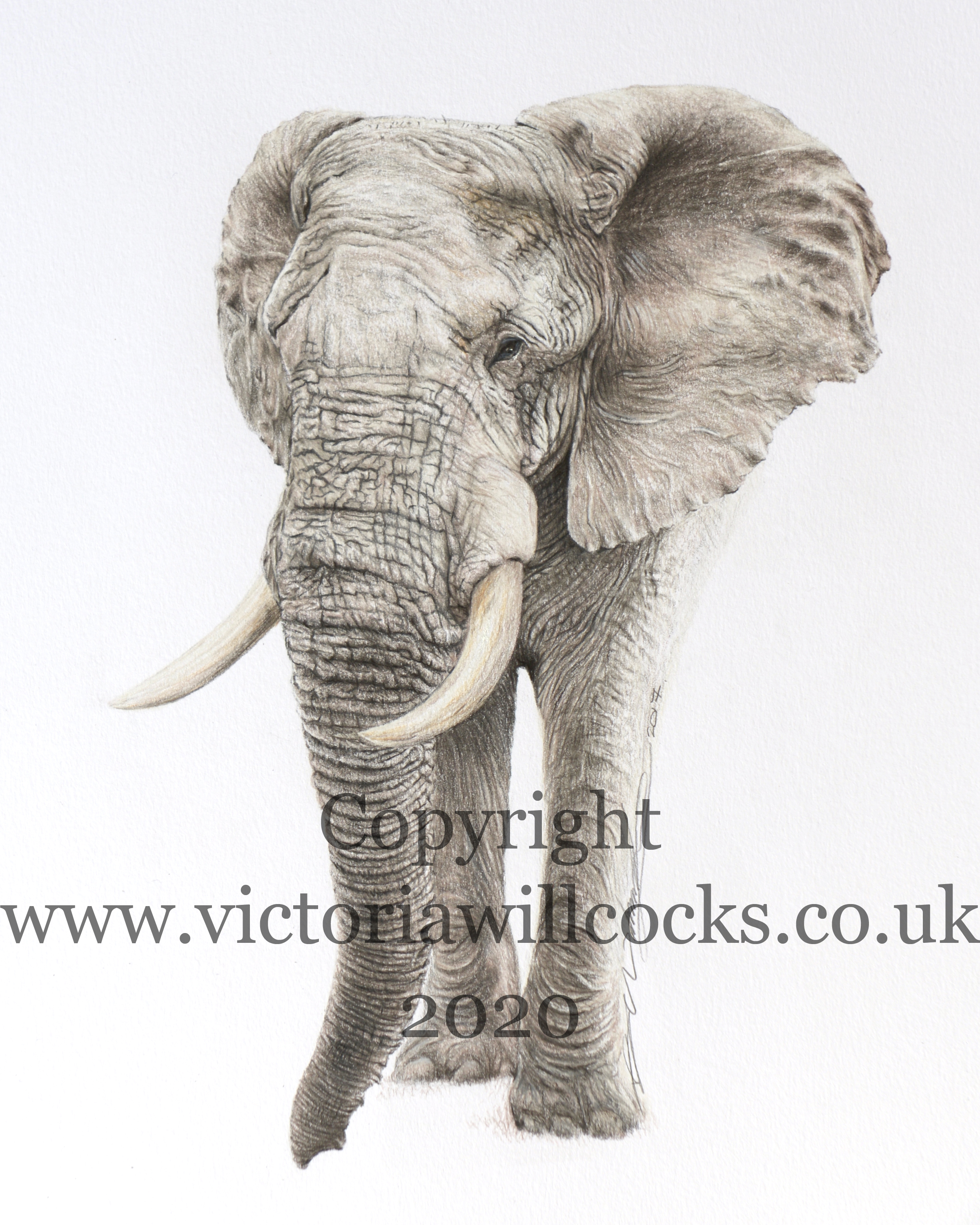 Elephant Victoria Willcocks
