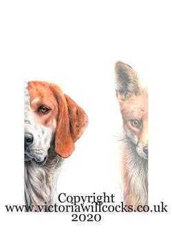 Fox and Hound Victoria Willcocks