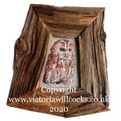 Tawny Owl Victoria Willcocks