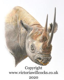 Black Rhino Victoria Willcocks