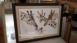 Giraffe Family Victoria Willcocks