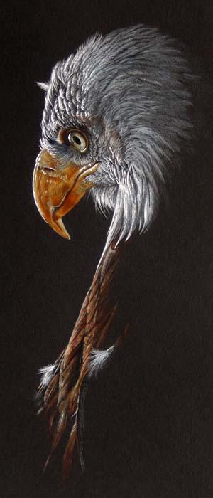 Bald Eagle on Black.jpg
