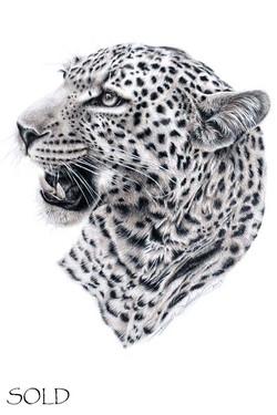 Leopard iii s