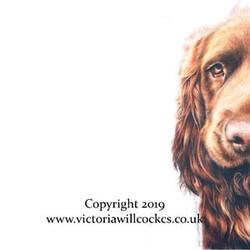 Tally Sussex Spaniel Victoria Willcocks.