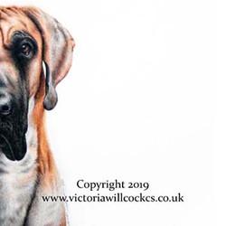 W Great Dane Victoria Willcocks