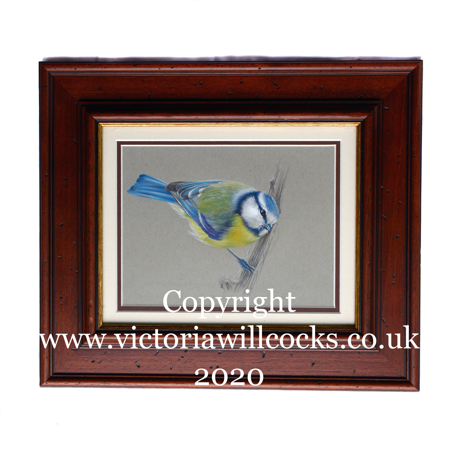 Blue Tit Victoria Willcocks