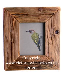 Green Woodpecker Victoria Willcocks