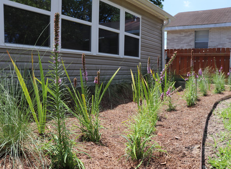 Launch NOLA Green Landscape Transformation: Stacy's Story