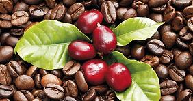 coffee beans for website.JPG