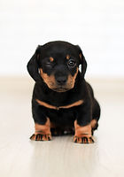 winking-black-and-brown-puppy-2023384.jp