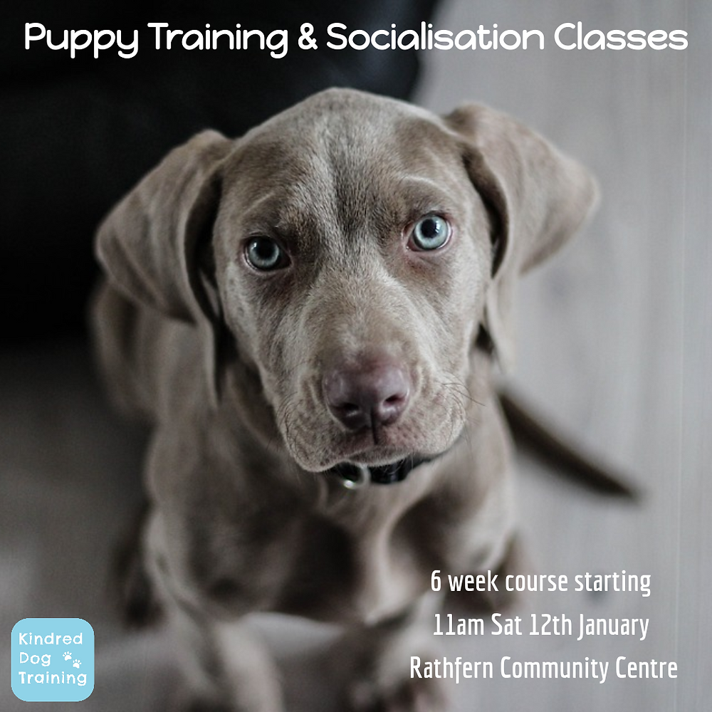 Puppy Training Classes in Newtownabbey. Rathfern Community Centre Saturday 12th January 2019. Puppy socialisation. Puppy Training. Puppy Class. County Antrim, NI, Northern Ireland