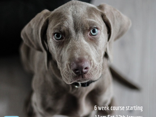Puppy training classes starting soon in Newtownabbey