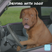 Top tips for safely driving with dogs