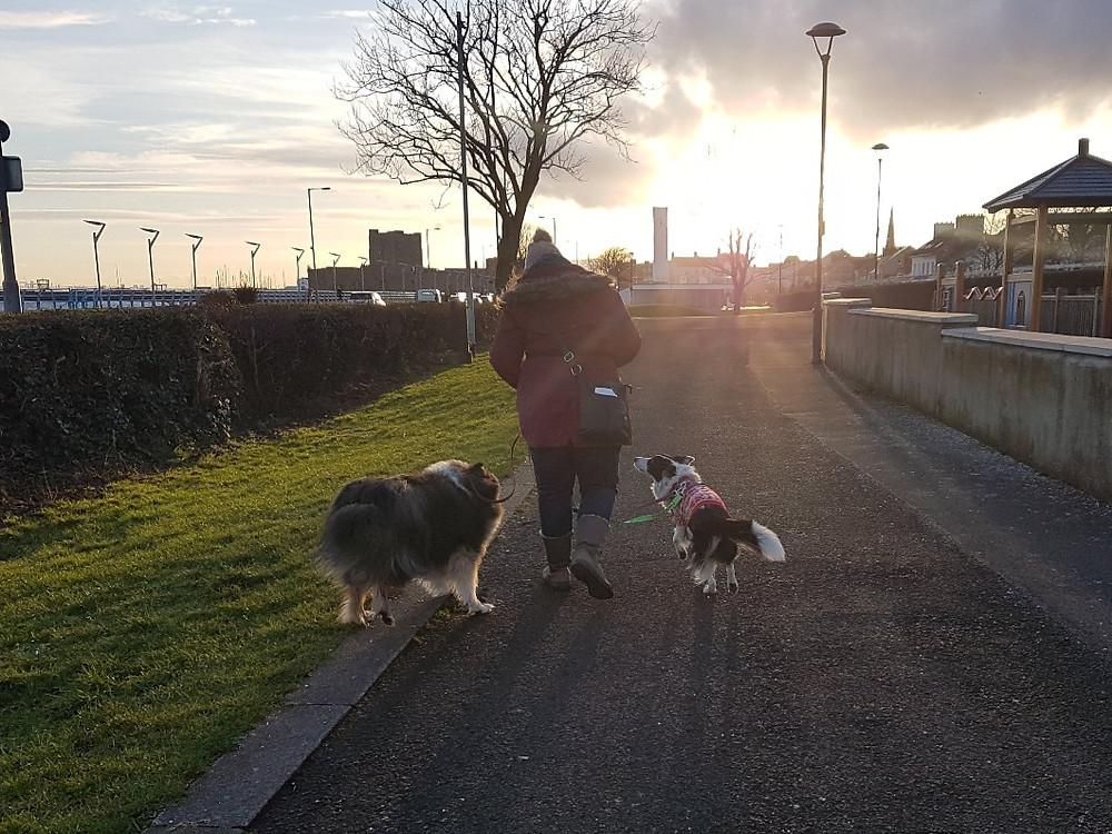 Dog training classes, dog trainer, Carrickfergus Whitehead Greenisland Jordanstown Monkstown Glengormley Newtownabbey Monkstown Co Antrim Northern Ireland NI