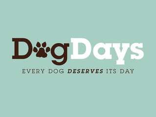 Dog Training Classes at Dog Days Newtownabbey