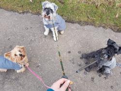 Kindred Dog Training - dog walks