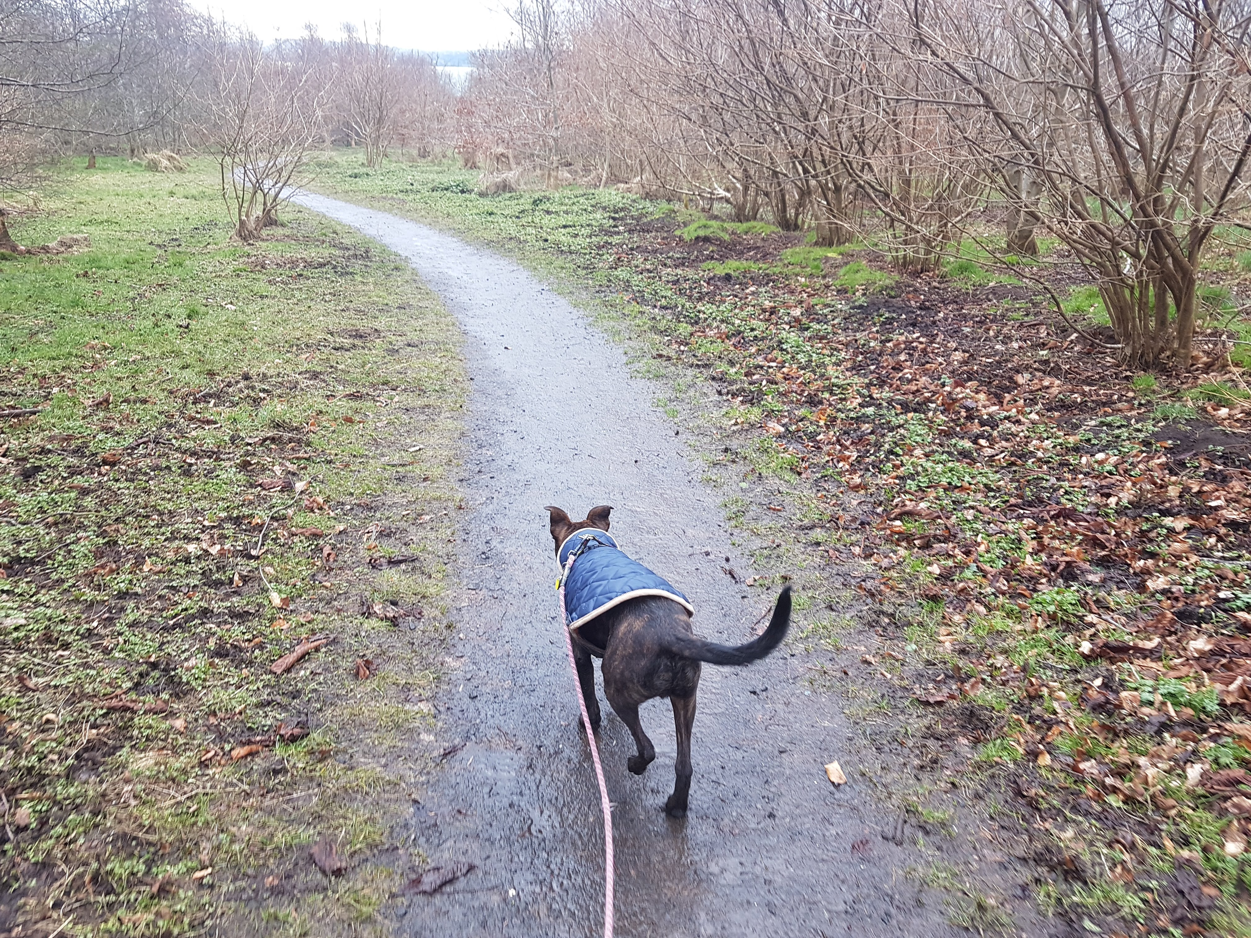 Kindred Dog Training - dog walks