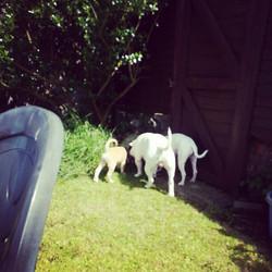 Kindred Dog Training - dog sitting