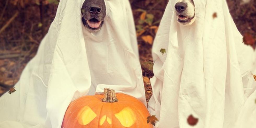 Tricks for Treats - Halloween Tricks Workshop