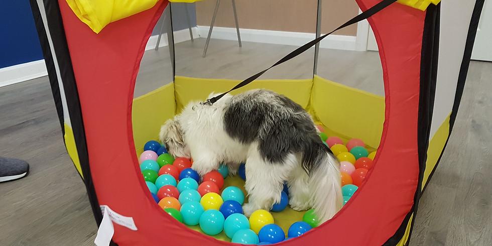 Dog Enrichment Hour - 17th August 11am