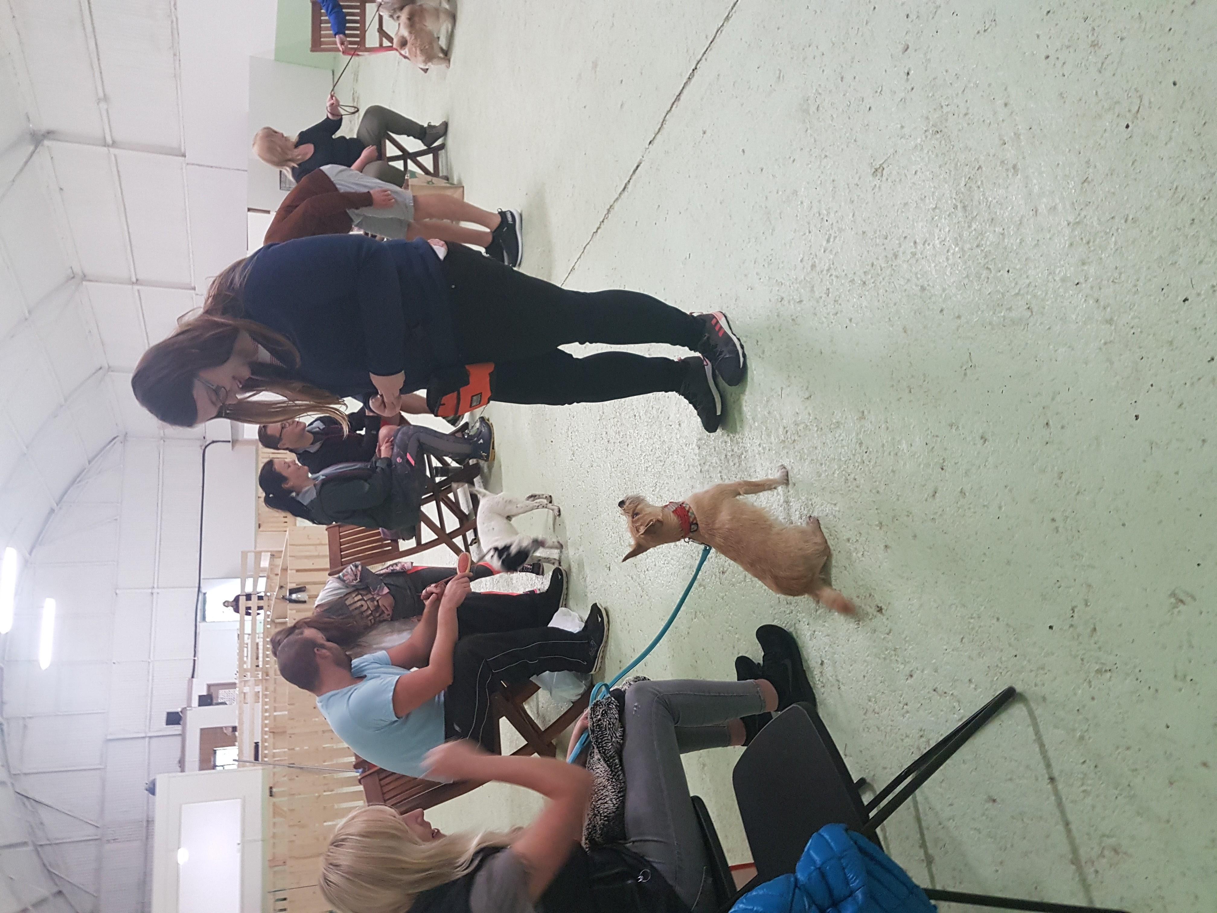 Kindred Dog Training - dog classes