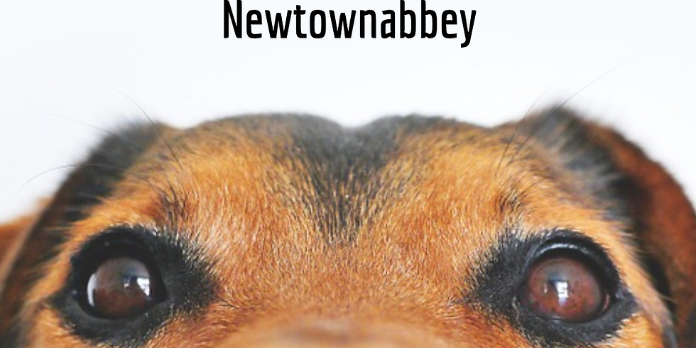 Scentwork Class - Newtownabbey (8th October 2019)