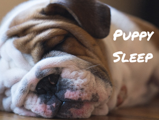 8 Top Tips to Help your New Puppy Sleep Through the Night
