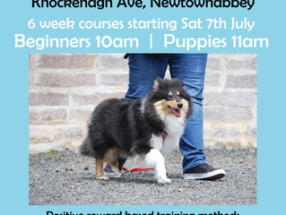 Puppy & Beginners Dog Training Classes Newtownabbey starting 7th July