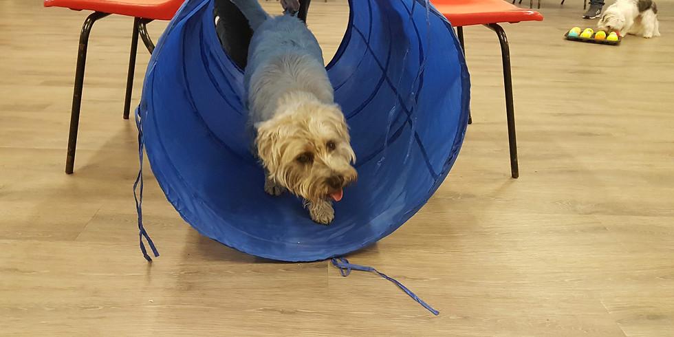 Fun Dog Training Class (starts 12th January)