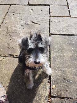 Kindred Dog Training - puppy walks