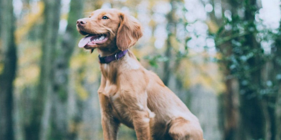 Sold Out - Teen Puppy Training Class - Newtownabbey (10th Oct 11am)