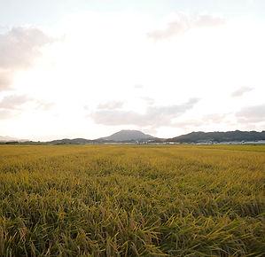 秋の田んぼ風景